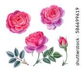 watercolor hand painted roses.... | Shutterstock . vector #586699619