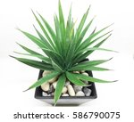 agave isolated on white... | Shutterstock . vector #586790075
