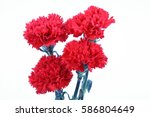 Carnation Flowers Isolate On...