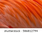 Closeup Of Colorful Flamingo...