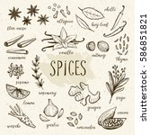 hand drawn herbs and spices... | Shutterstock .eps vector #586851821