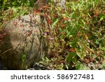 Small photo of Closeup of flower with red stems and small pink blossoms (perhaps alfilaria) grown through with green leaved tendrils of bindweed beside a huge boulder / rock