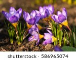 view of magic blooming spring... | Shutterstock . vector #586965074