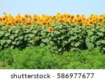 photo of  beautiful bright... | Shutterstock . vector #586977677