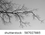 Black Tree Branch And The Grey...