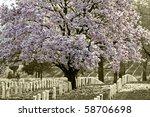Arlington Natoinal Cemetery....