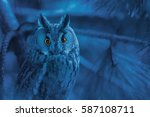 Portrait Of Owl With Piercing...