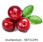Cowberry Lingonberry  Vacciniu...
