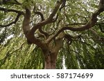 curvy tree branches | Shutterstock . vector #587174699