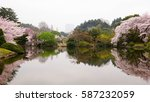 cherry blossoms and reflection...   Shutterstock . vector #587232059