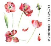 set of red tulips isolated on... | Shutterstock . vector #587291765