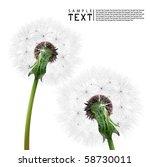 vector dandelion   Shutterstock .eps vector #58730011
