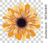 gerbera flower isolated on...   Shutterstock .eps vector #587361845