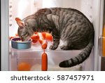 cat in the refrigerator at home | Shutterstock . vector #587457971