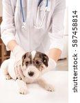 veterinarian examining cute... | Shutterstock . vector #587458814