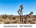 Joshua Tree National Park Is A...