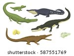 cartoon green crocodile danger... | Shutterstock .eps vector #587551769