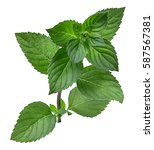 mint leaf isolated over white... | Shutterstock . vector #587567381