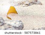 a piece of broken brown glass...   Shutterstock . vector #587573861