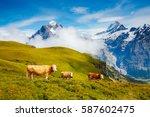 cows graze on alpine hills in... | Shutterstock . vector #587602475