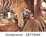 tiger cubs being affectionate...   Shutterstock . vector #58773469