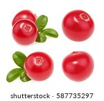 cranberry isolated. set | Shutterstock . vector #587735297