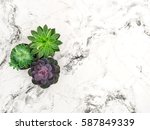 succulent on marble background. ... | Shutterstock . vector #587849339