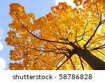 Branch Of Beautiful Autumn...