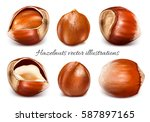 hazelnuts. whole nuts and... | Shutterstock .eps vector #587897165