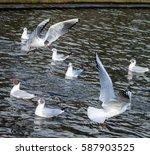 Birds At Inverleith Pond In...