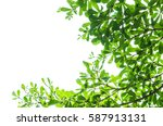 green leaf isolated on the... | Shutterstock . vector #587913131