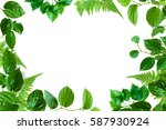green trees and leaf greenery... | Shutterstock . vector #587930924