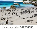 African Penguins Or Black...