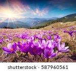 colorful spring landscape in...   Shutterstock . vector #587960561