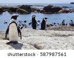 Penguins On A Rock At Boulders...