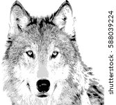 hand drawing the wolf face on... | Shutterstock .eps vector #588039224
