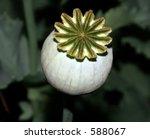 Seed Head Of A Poppy