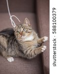 Stock photo playing cat 588100379