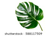 tropical palm leaves. flat lay  ... | Shutterstock . vector #588117509