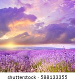 flower field and blue sky with...   Shutterstock . vector #588133355