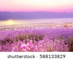 beautiful image of lavender... | Shutterstock . vector #588133829