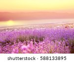 beautiful image of lavender... | Shutterstock . vector #588133895