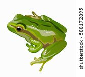 Large Green Frog Vector...