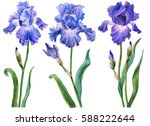 Watercolor Set Of Irises  Hand...