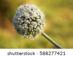 large decorative ball blossom...