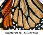 Macro close up of an monarch...