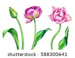 watercolor illustration ... | Shutterstock . vector #588300641