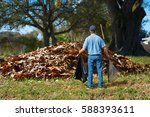 a distraught man with a rake... | Shutterstock . vector #588393611