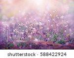 meadow flowers  beautiful fresh ...   Shutterstock . vector #588422924