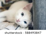 Stock photo kitten 588493847